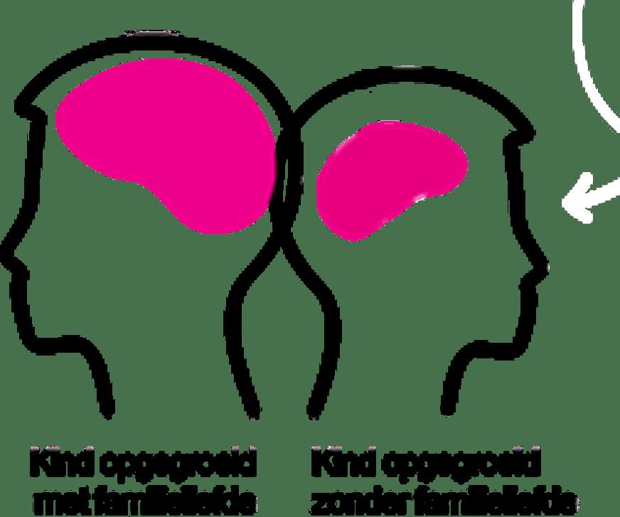 Verschil in hersenomvang onder 3 jarigen - familieliefde of geen familieliefde